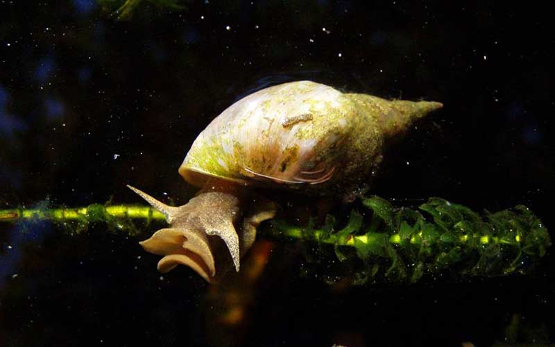 animaux dangereux escargots - topofthetop