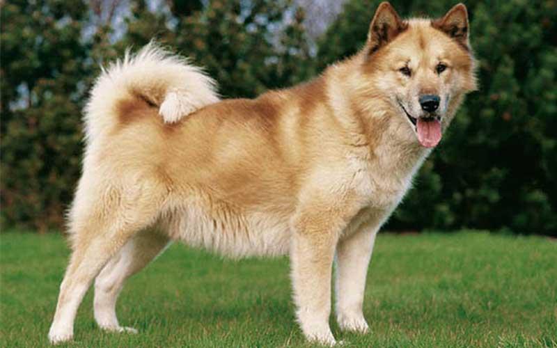 chien animaux dangereux - topofthetop